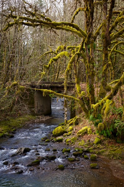a creek with bridge crossing and moss covered trees.