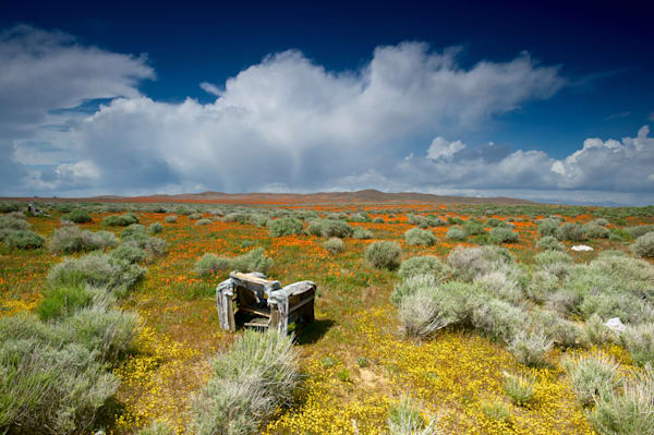 an abandoned chair in the wildflower fields in southern california.