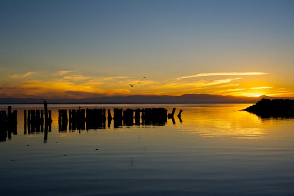 sunset at the salton sea with gulls flying by