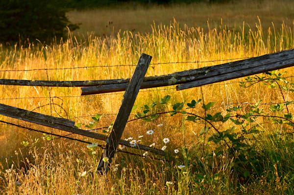 sulit grass and broken fence with daisies