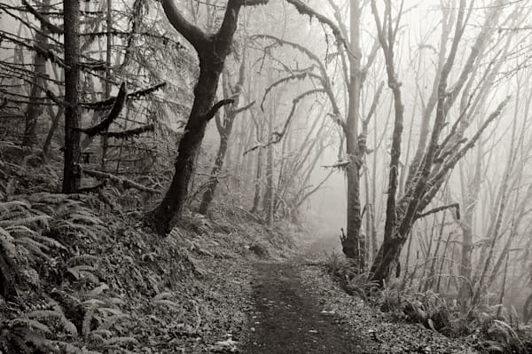 A foggy trail on Mt Pisgah through the woods.