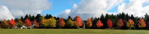 a row of trees with fall colors in pleasant hill, oregon.
