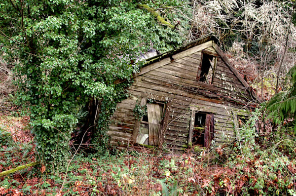 photos of a dilapidated house outside of eugene, oregon