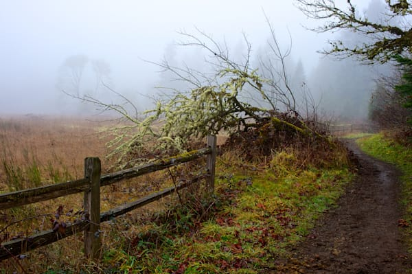 photo of a foggy morning walking along the fence at elijah bristow state park on the outskirts of eugene, oregon