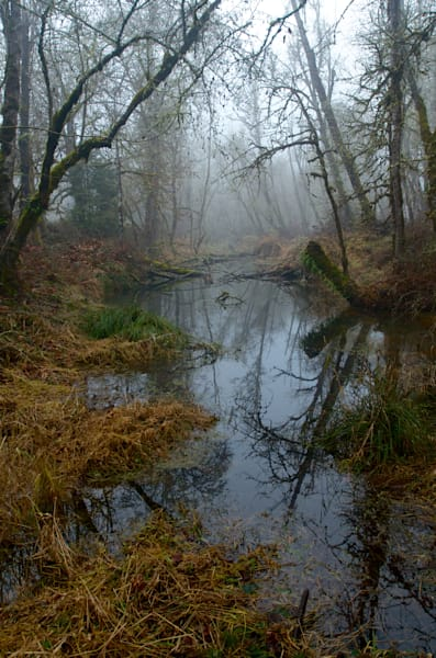 photo of a pond at elijah bristow park on a foggy morning