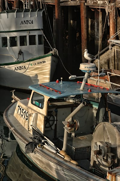 photo of fishing boats in san pedro with seagull