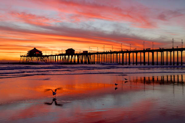 photo taken in 2004 at sunset of the huntington beach pier with gull taking off