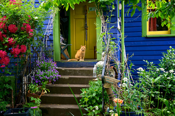 photo of a ginger cat on the porch of a colorful home in the whiteaker district of eugene, oregon.