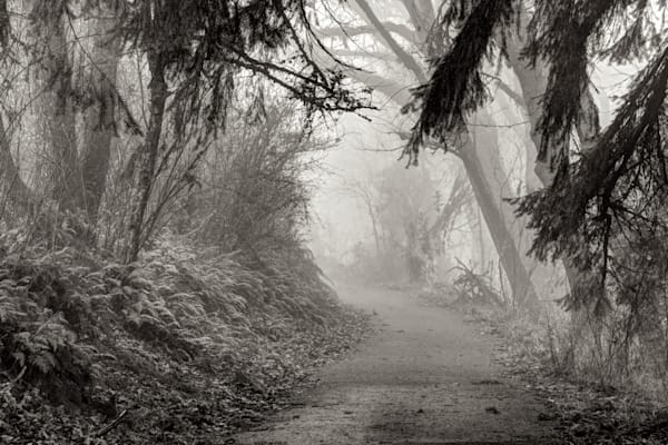 photo of a foggy path up on skinners butte in eugene, oregon