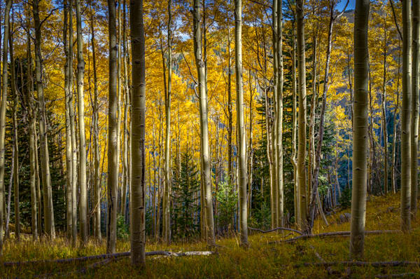 Autumn, Landscape, New Mexico, Photography, Santa Fe. Southwest, Aspens