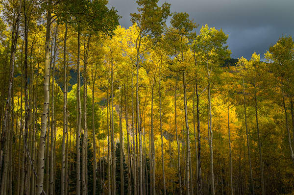 aspens-before-a-storm-02