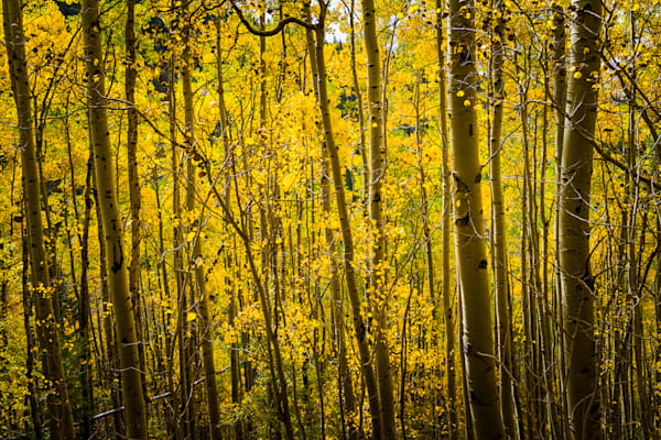 Autumn, Landscape, New Mexico, Photography, Santa Fe, Aspens, Southwest