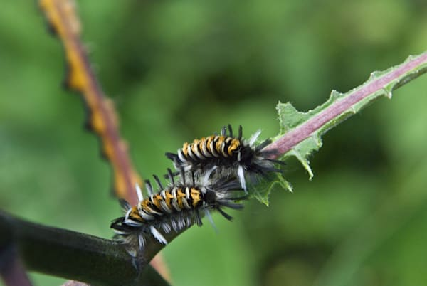 """Caterpillar Crawl"""