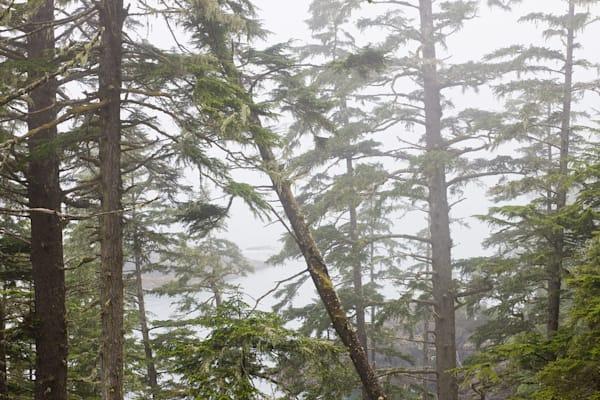 Tofino Treetops
