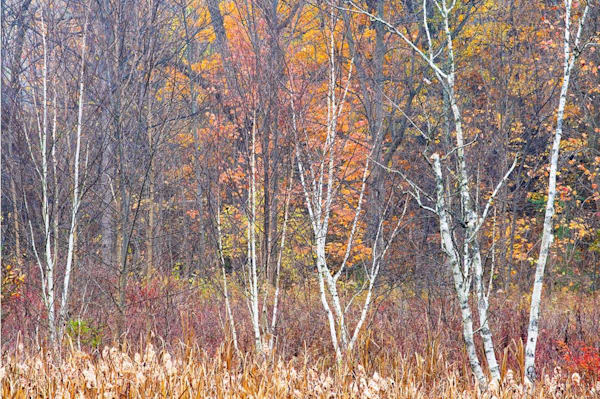 Textures Of Fall Art | Andrew Collett Photography