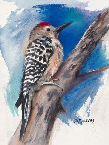 Gila Woodpecker | Southwest Art Gallery Tucson | Madaras
