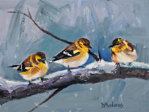 Three Yellow Finches | Southwest Art Gallery Tucson