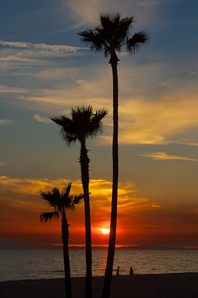 3 palm trees sunset in newport beach, california with catalina in the background
