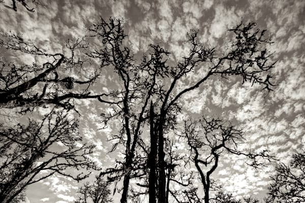 photo of trees silhouetted against puffy clouds at mt pisgah, oregon