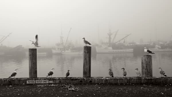 San Pedro Fishing Boats and Gulls in Black & White Canvas Print
