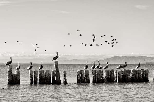 Classic Black and White Photograph from the Salton Sea.