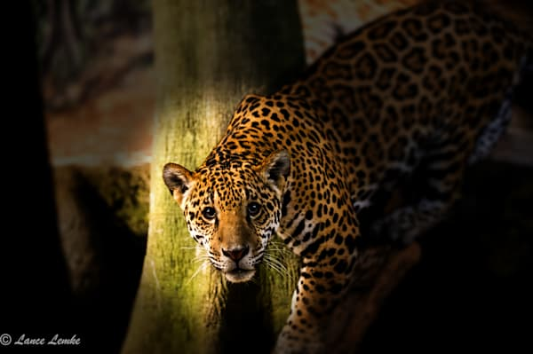 jaguar-2-dsc2622-edit-edit