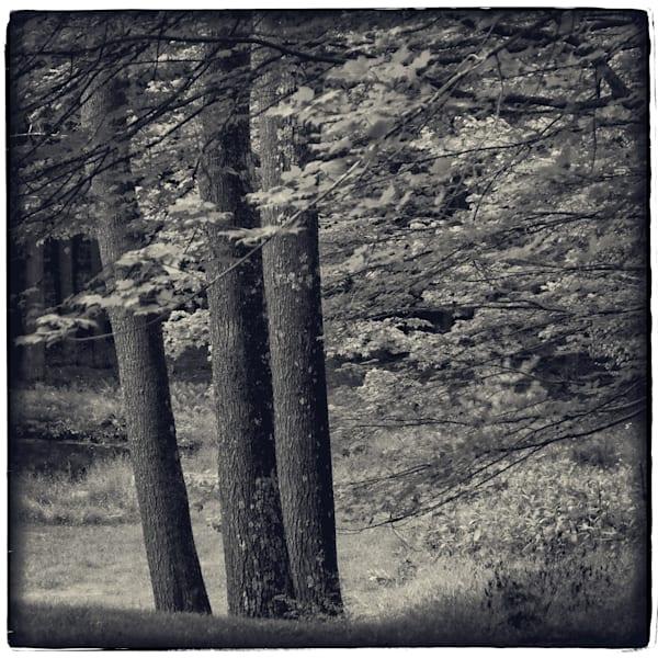 Three Trees, Woodstock, Ny Photography Art | David Frank Photography