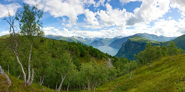 Fjord and Birch Trees - Eidsdal - Norway