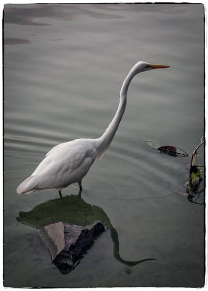 Garden Visitor #3 Photography Art | David Frank Photography