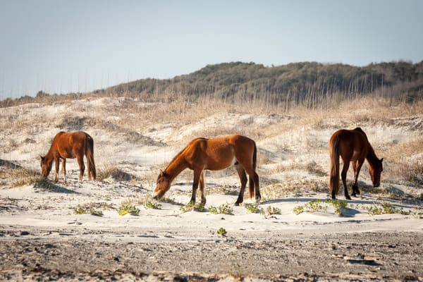 Wild Horses of Cumberland