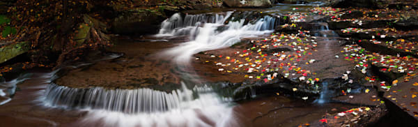Falling Leaves Photography Art | Scott Cordner Photography