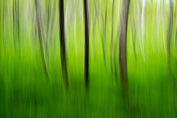 Tree Swipe Fine Art Photograph | JustBob Images