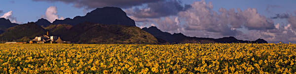 Koloa Sugar Mill & Sunflowers | Kauai Fine Art Photography, Hawaii