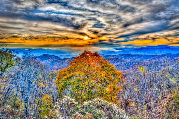 Blue Ridge Tree Photography Art | Zakem Art LLC