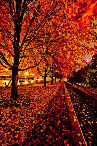 Chicago Autumn Trees Photography Art | Zakem Art LLC