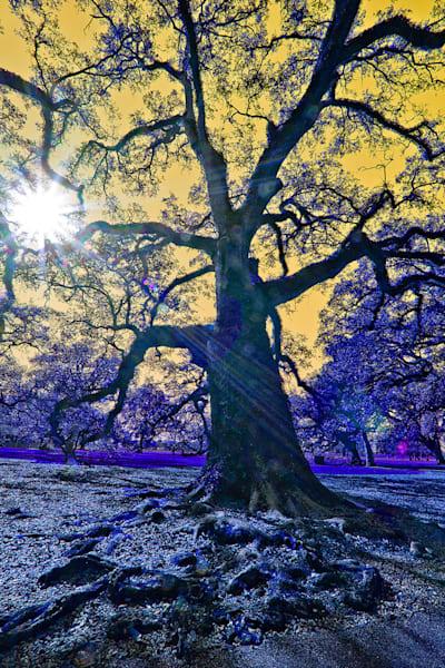 Oak Sunset Photography Art | Zakem Art LLC