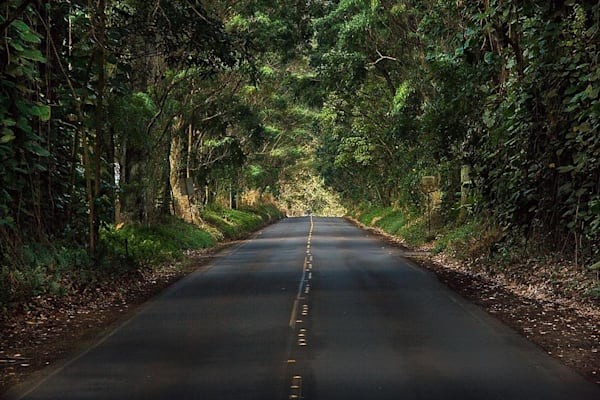 Tree Tunnel Road | Kauai Fine Art Photography, Hawaii
