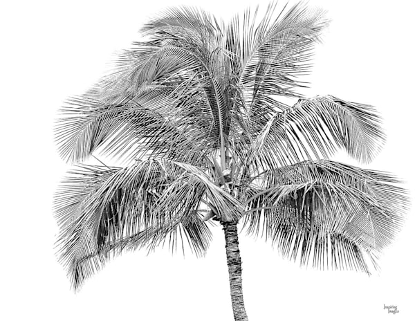 Palm Tree in Black and White | Kauai Fine Art Photography, Hawaii