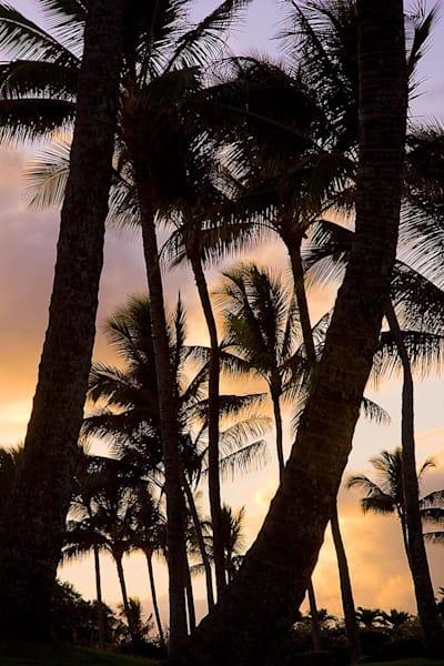 Palm Trees at Sunset | Kauai Fine Art Photography, Hawaii