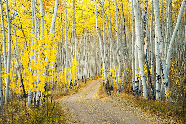 5965 Fall Road Thru Aspen Art | Cunningham Gallery