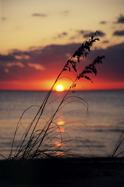Sea Oat Sunset V Art | Cunningham Gallery