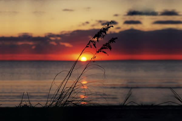Sea Oats Sunset Art | Cunningham Gallery