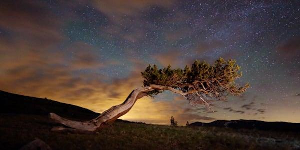 5817 Bristlecone Pine Tree Windy Ridge, Colorado Art | Cunningham Gallery
