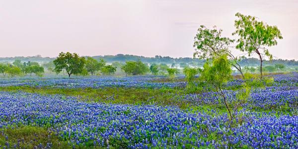 8388 Blue Bonnets Texas Art | Cunningham Gallery