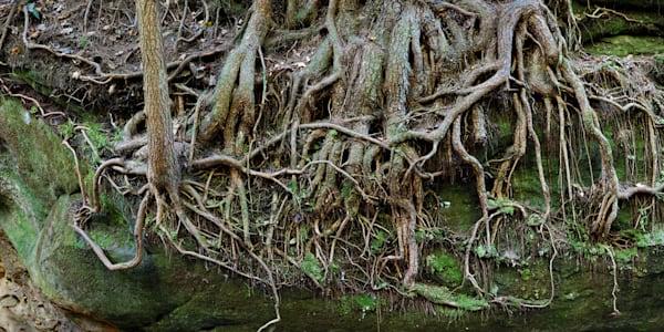 Tree Roots Art | Cunningham Gallery