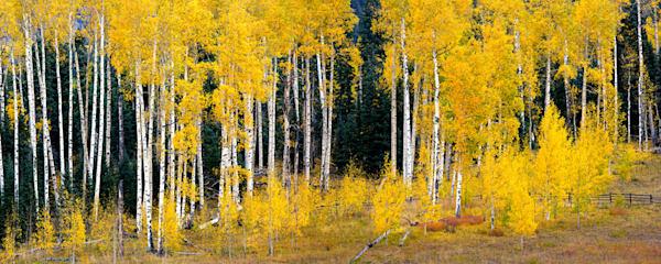 2317 Fall Aspen Art | Cunningham Gallery