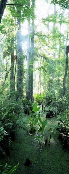 Corkscrew Swamp Art | Cunningham Gallery