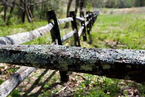 Fence Moss
