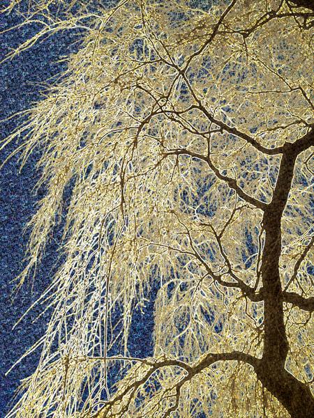 Willow Ice