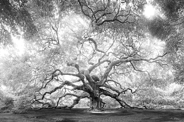 5067 Angel Oak Art | Cunningham Gallery